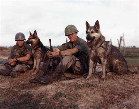 war dogs war dogs war