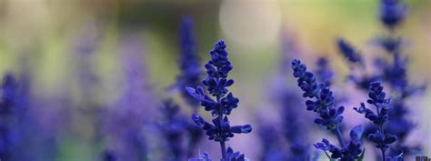 Download Wallpaper Lavender flowers (3200 x 1200 Dual