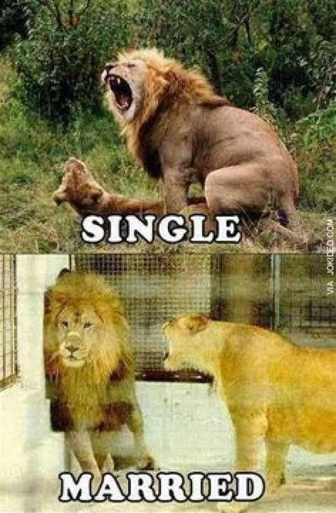 Meme Animal - single vs married adult animal meme http www jokideo