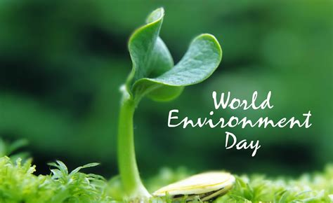 environment day world environment day quotes quotesgram
