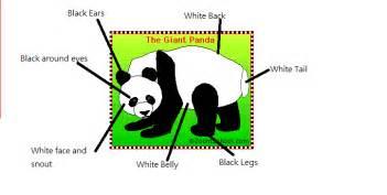 panda wiring diagrams panda wiring diagram free