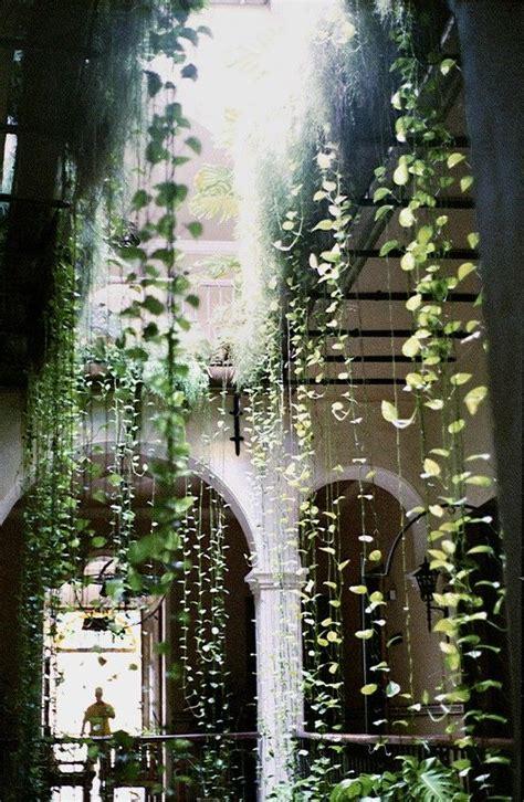 plants that drape 25 best ideas about ivy on pinterest plants vines and
