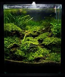 aquascape nano nano aquarium einrichten schritt f 252 r schritt anleitung