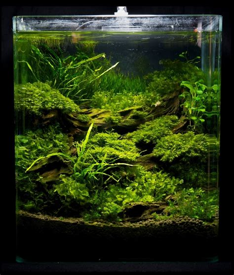 Nano Aquarium Pflanzen by Nano Aquarium Einrichten Schritt F 252 R Schritt Anleitung