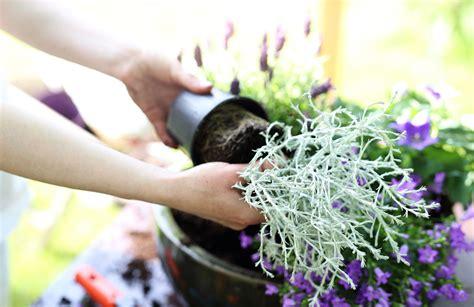 stauden pflanzen wie pflege und pflanze ich stauden im herbst g 228 rtnerei