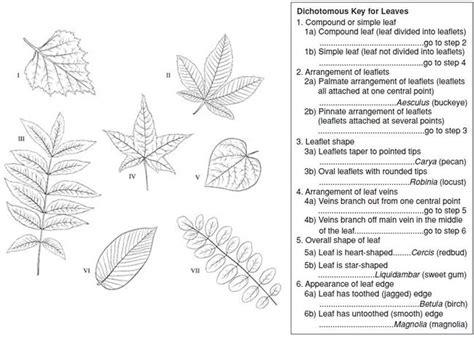 Dichotomous Key Worksheet by Quia 11 A Dichotomous Key