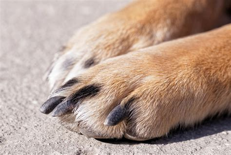 how to your to do paw how to treat my dogs split nail nail review