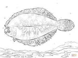 flounder coloring pages bigeye flounder coloring page free printable coloring pages