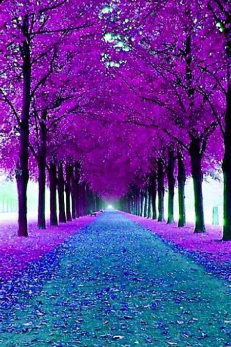 purple blue color blue purple nature www pixshark images galleries