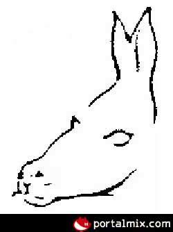 imagenes de doble sentido que se muevan imagenes q no se mueven pero si ilusion taringa