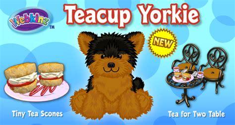 teacup yorkie ga teacup yorkie wkn webkinz newz