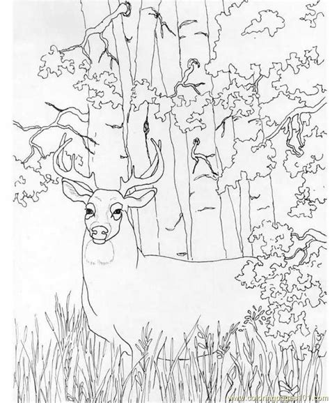 search results for buck deer head coloring page