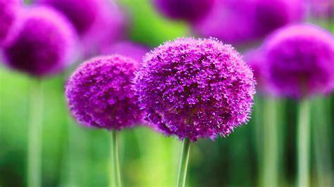 fiori wallpaper flowers amidst nature hd sfondo and sfondo