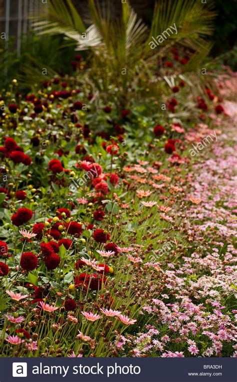 walled gardens of cannington mixed flower summer border at the walled gardens of