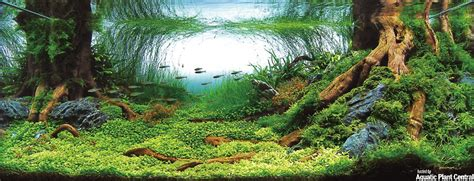 aquascaping tips aquascaping acvaiasi