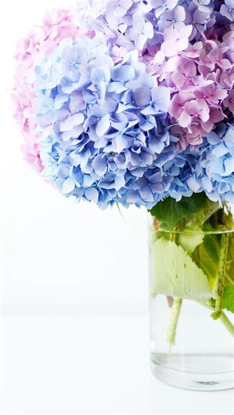 flowers hd macro  hd wallpaper flower hd macro