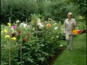 garden  colorful dahlias  home garden