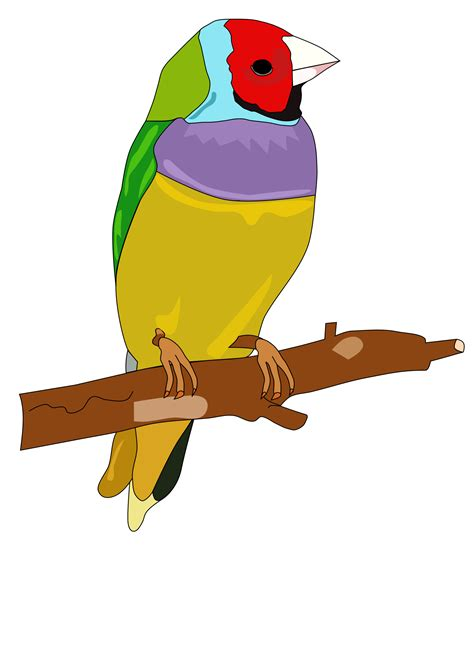 Clipart For Free Free Parrot Cliparts Free Clip Free