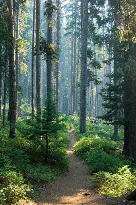 forest  smoke