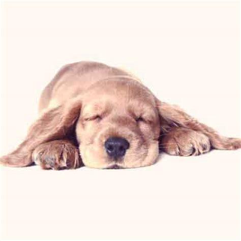 treating diarrhea in dogs diarrhea in your or cat petcarerx
