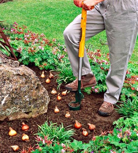 when to plant a fall garden 17 best images about gorgeous garden plants on
