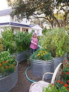 trough garden containers trough gardening tips bitesizegardening