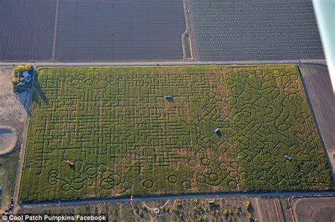 worlds biggest corn maze forced  downsize