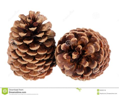 Brown By Dreamcone Soflens two brown pine cone royalty free stock photos image 35032118