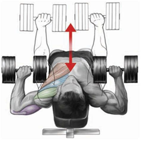 dumbbell bench press variations chest bo dy com