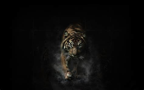 tiger backgrounds tiger wallpapers and backgrounds 2203 hd wallpaper site