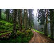 Nature Landscape Dirt Road Forest Hills Green Trees