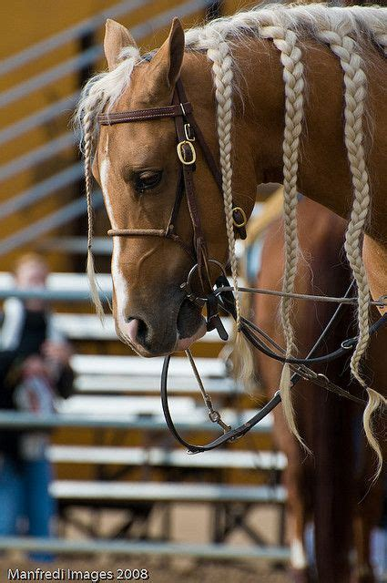 Barrel Racing Horse Hair Braids   124 best images about western wear horse tack on pinterest
