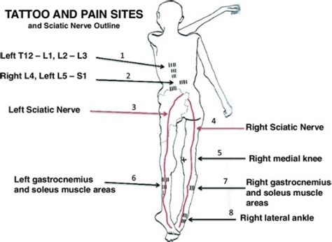 a graphic outline of the prone and supine positions of