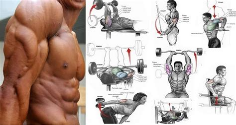 best workout for the best tricep exercise routine for big triceps