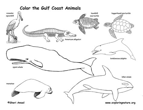 coloring pages of animals in their habitats wetlands habitat coloring page wetland animals pages on