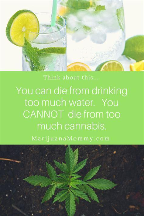 Houseplants For Low Light Areas is marijuana harmful 5 ordinary things more dangerous