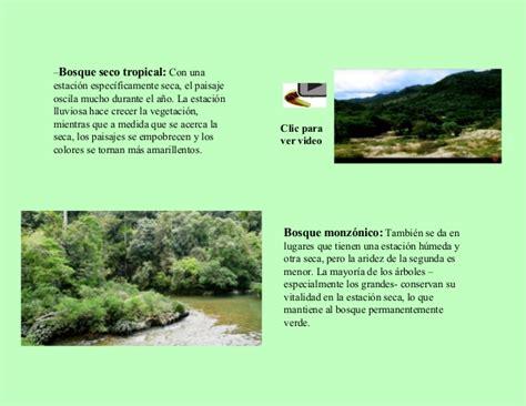 libro los bosques ibericos practicos los bosques libro digital