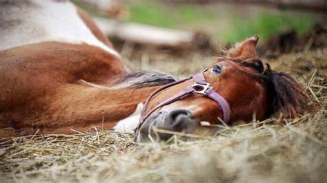 hund hat pilz im garten gefressen pferd vergiftet was tun tiergesund de