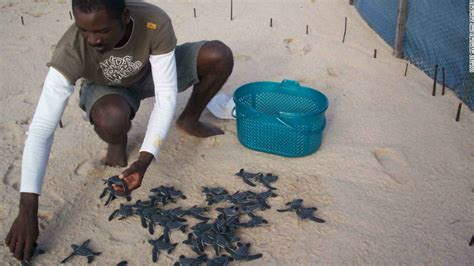 overkill the race to save africa s wildlife books race to save the leatherback turtle cnn
