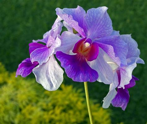 Sulap Five In One Flower orchids orkid 233 er