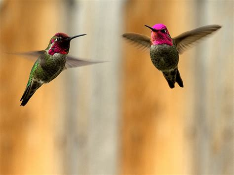 pin by teresa tess howie on butterfly hummingbird