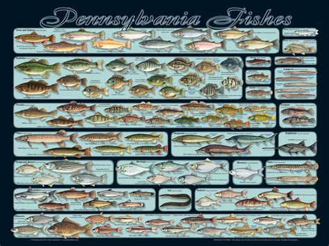 http fishandboat pafish pa fishes poster jpg gifts - Pa Fish And Game Boat Rs