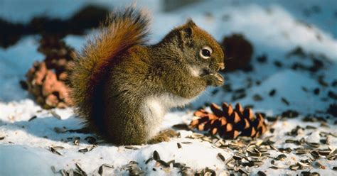 how to feed wild squirrels ehow uk