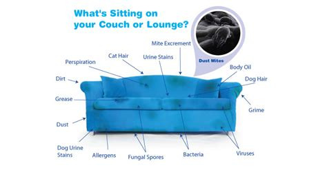 upholstery cleaning hamilton professional upholstery cleaning riverside ca furniture