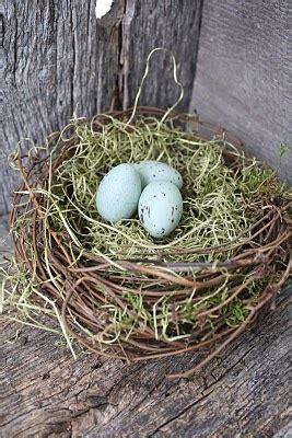 1000 images about nidos huevos on pinterest robins