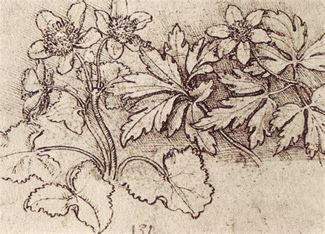 from pattern to nature in italian renaissance drawing history of art renaissance leonardo da vinci