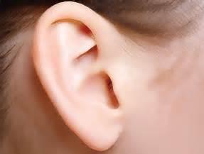 prominent ear surgery dr franz f birkholtz