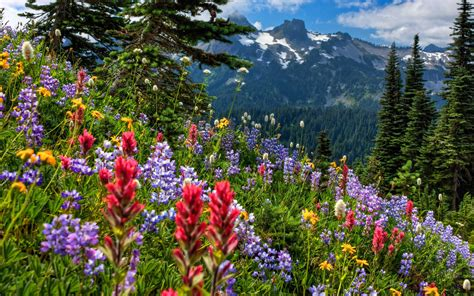 Flower Mountain wildflowers on mountainside hd wallpaper and