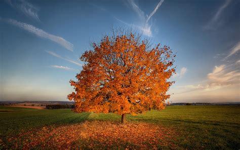 imagenes otoñales hd 193 rbol de las hojas de oto 241 o co cielo fondos de pantalla