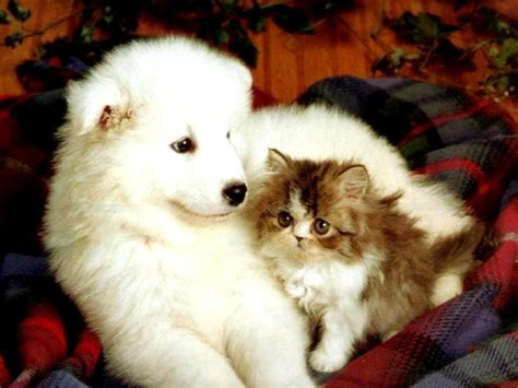 puppy and cat cat and together